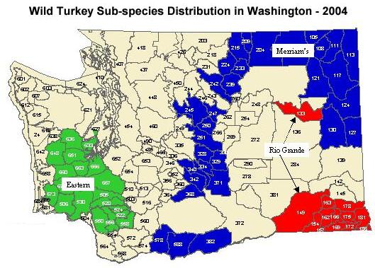 Washington Turkey Hunting - The Wild Turkey Zone
